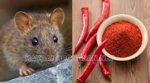 Cách đuổi chuột trong nhà đơn giản