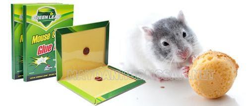Cách làm sạch keo dính chuột trên sàn nhà, quần áo đơn giản