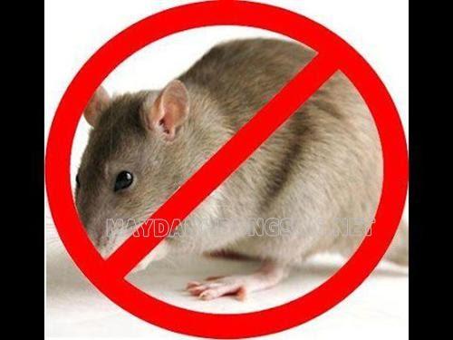 Mẹo đuổi chuột trong nhà hiệu quả
