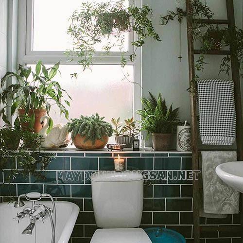 Những loại cây nên trồng trong nhà vệ sinh